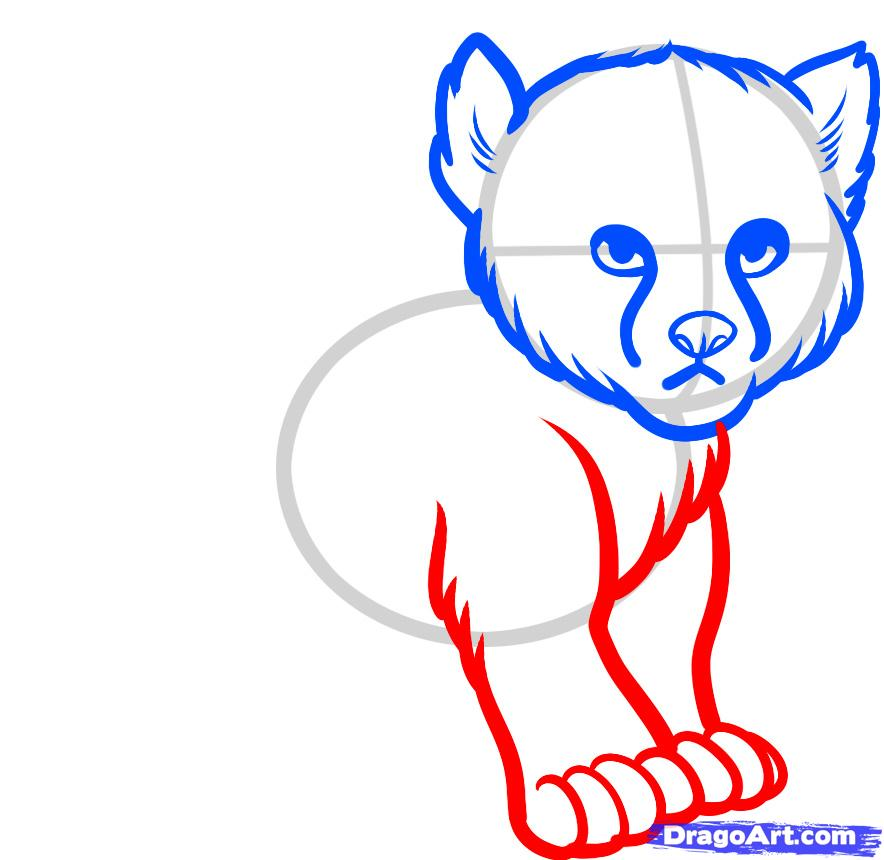 884x860 How To Draw A Baby Cheetah, Baby Cheetah, Step
