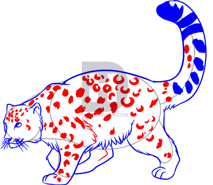 826x720 How To Draw A Snow Leopard, Step