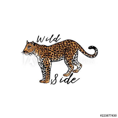 500x500 Wild Side Slogan Leopard Typography Graphic Print, Fashion