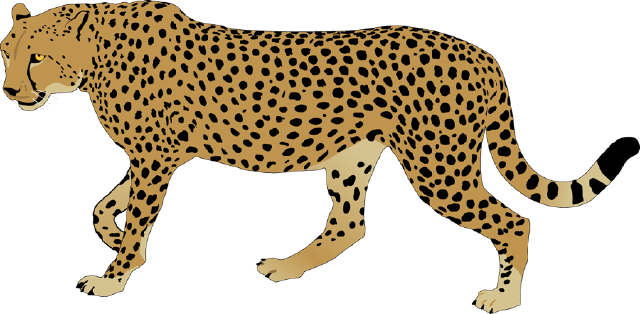 640x314 Drawing Cheetah Leopard Transparent Png Clipart Free Download