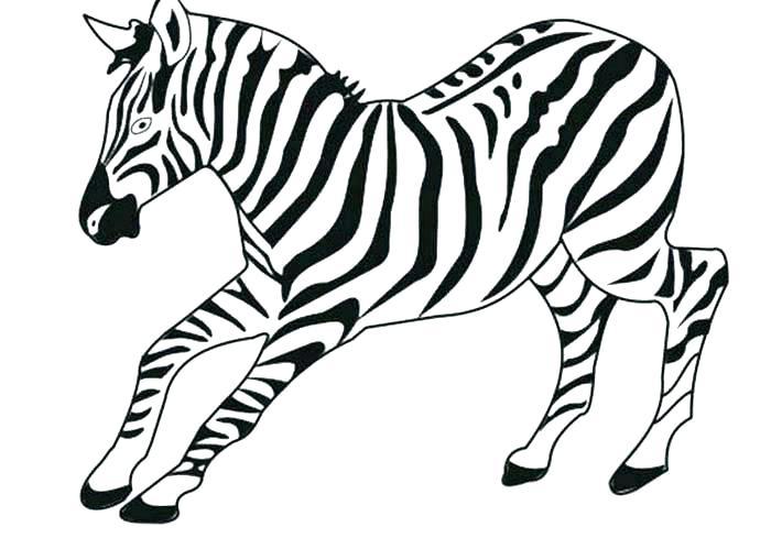 700x499 Coloring Pages Leopard Print Coloring Pages Baby Jaguar Zebra