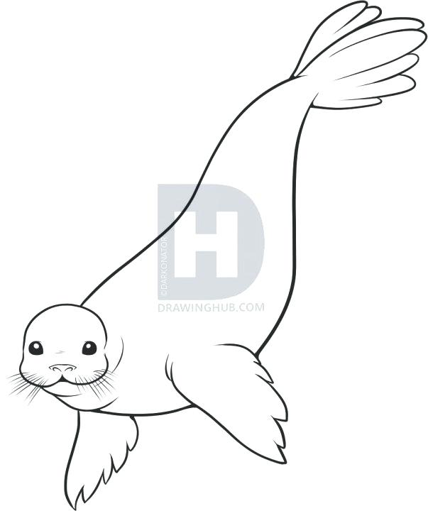 603x720 drawing a seal seal drawing for kids easy seal drawing step