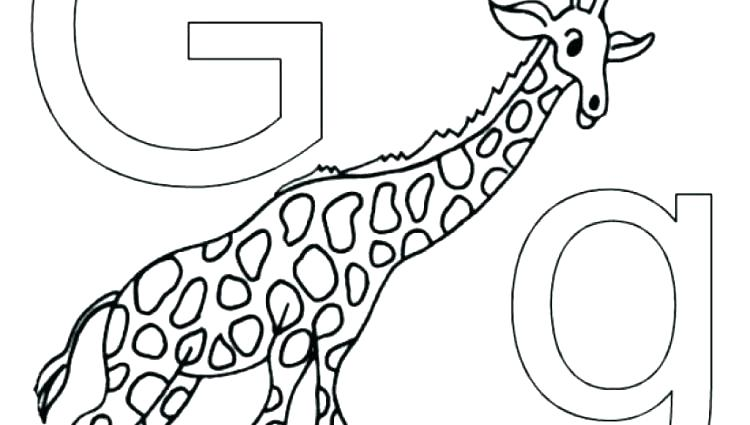 750x425 Alphabet Animals Coloring Pages Letter N Nautilus Animal Coloring
