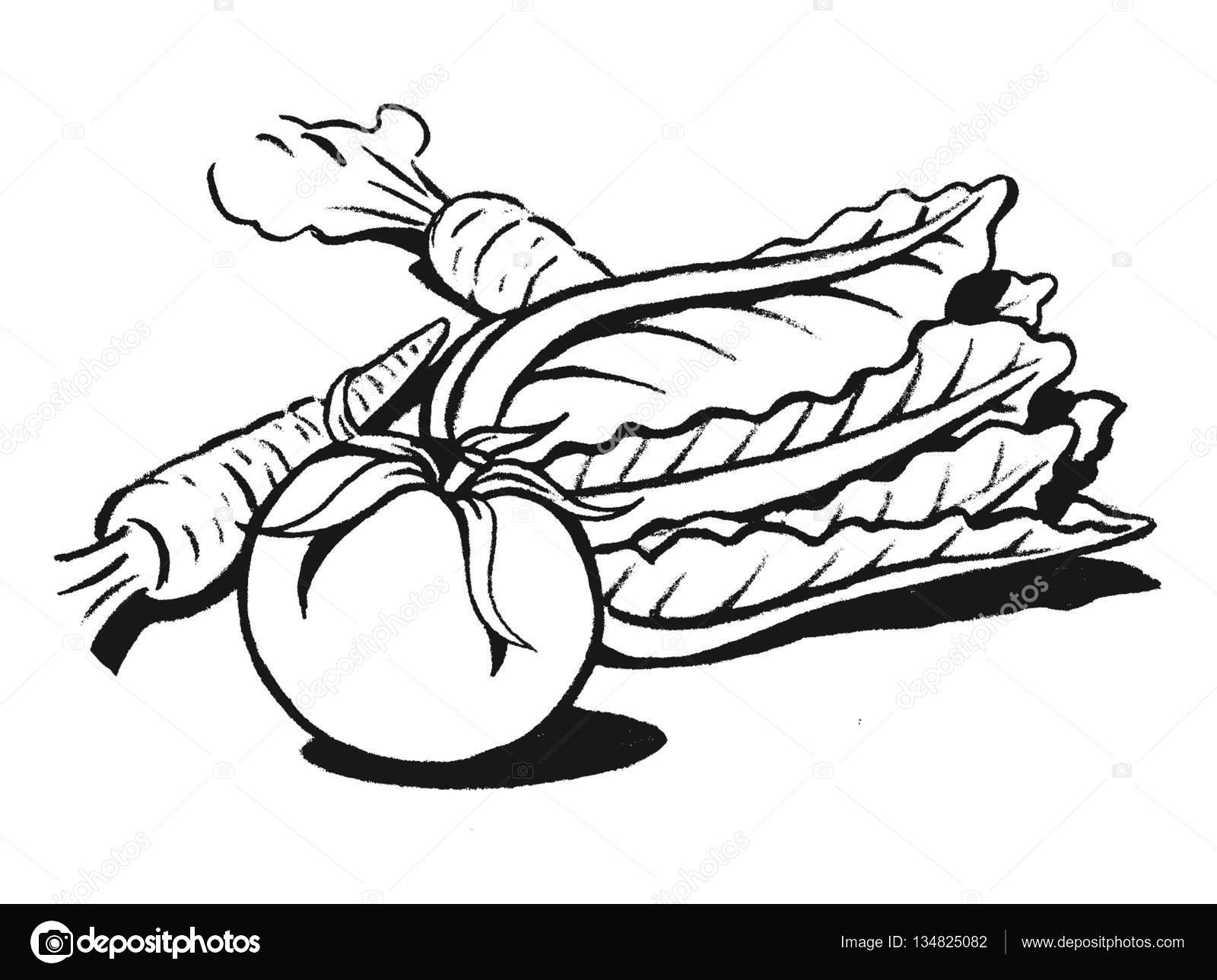 1600x1289 Tomato Drawing Lettuce For Free Download