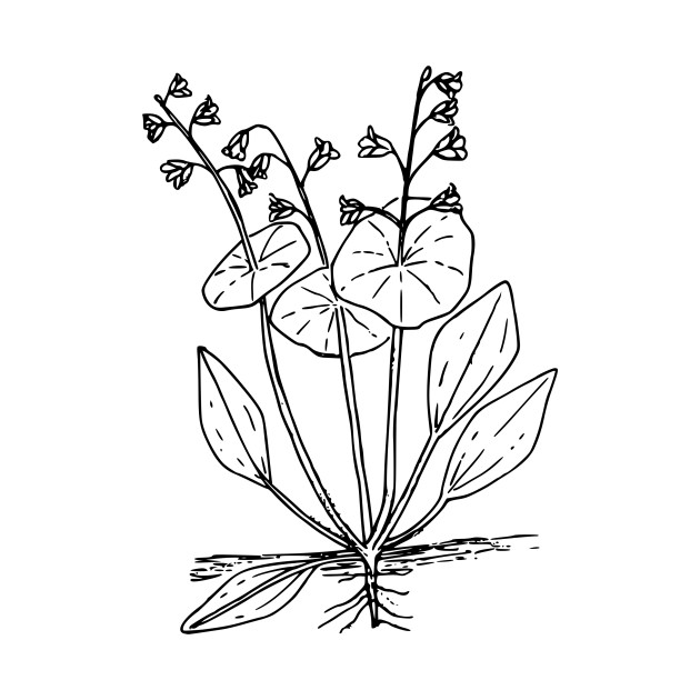 630x630 Miner Drawing Miners Lettuce For Free Download