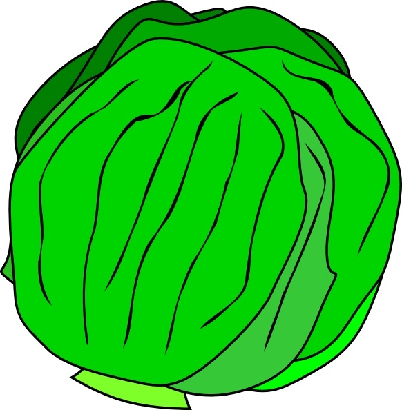 582x594 Whole Lettuce Clip Art Free Vector In Open Office Drawing