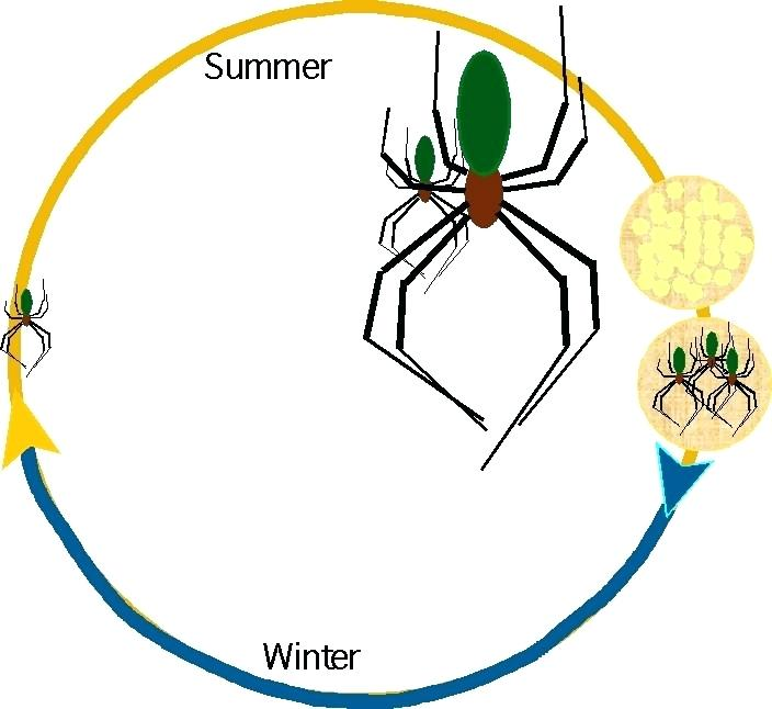 704x646 life cycle of life cycle of mosquito easy drawing annsmith club