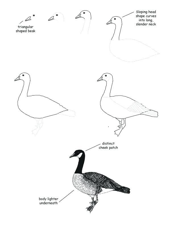 612x792 how to draw a goose how to draw a goose via how to draw goosebumps