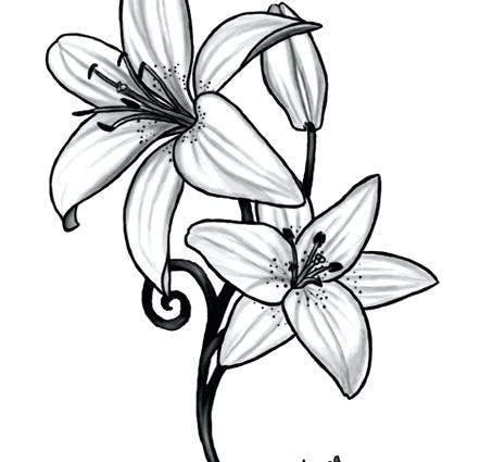 442x425 drawing lily flower draw lily flower step step lily flower drawing