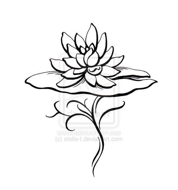 600x641 water lily drawing water lily tatoo design