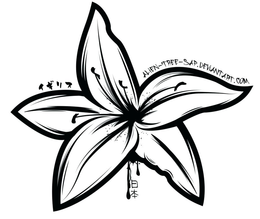 900x760 Drawing Lily Flower Drawing Stargazer Tiger Lily Flower Water