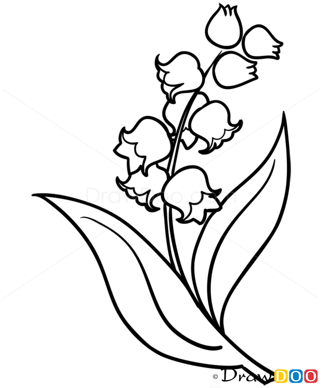 665x800 Gladiolus Drawing Lily Valley Flower For Free Download