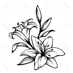 300x300 Lily Flower Clipart Black And White Soidergi