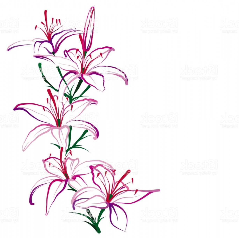 1228x1224 Lily Flower Vector Studiogrfx