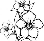 181x170 State Flowers Free Coloring Pages American Week Pretty Ideas Lily