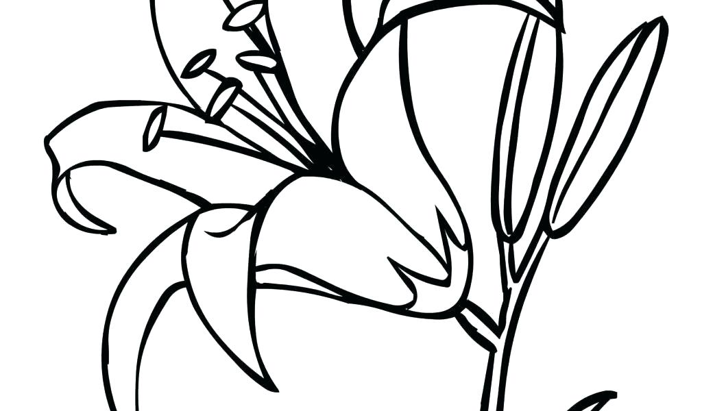 1024x600 Calla Lily Flower Drawing Architecture Synonym And Antonym