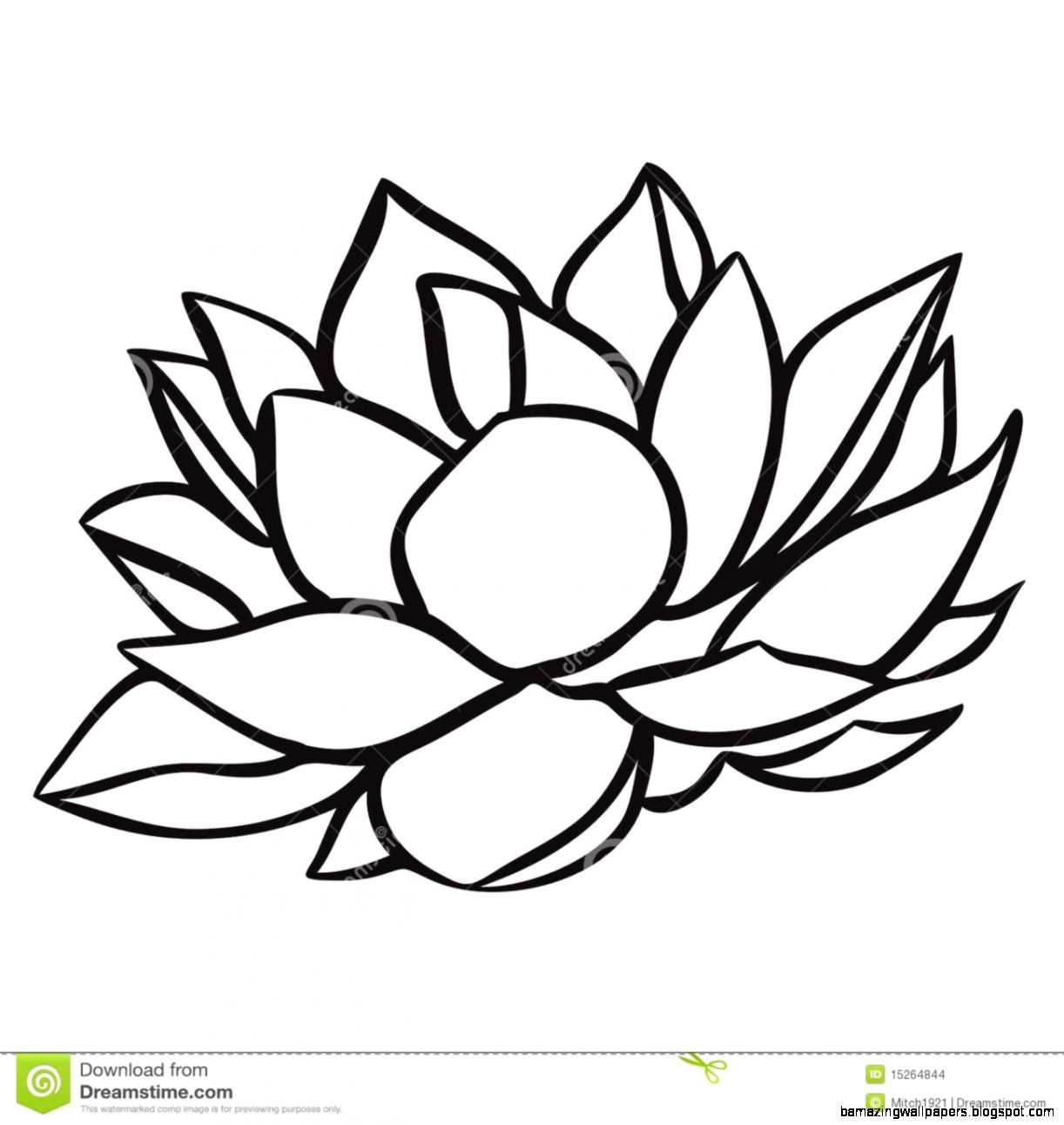 1222x1292 water lily flower drawing water lily drawing at getdrawings free
