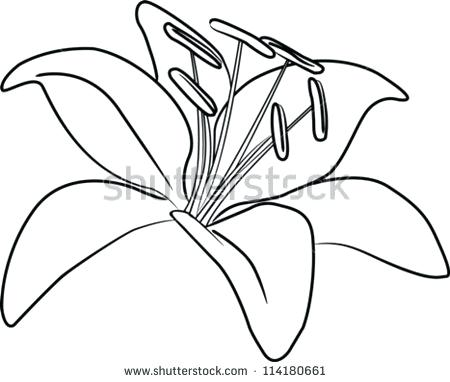 450x382 lily flower outline lily pad flower drawing at free for personal