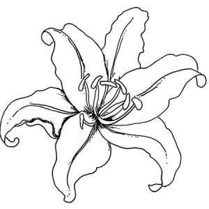 300x300 lily outline coloring pages lovely lily pad coloring