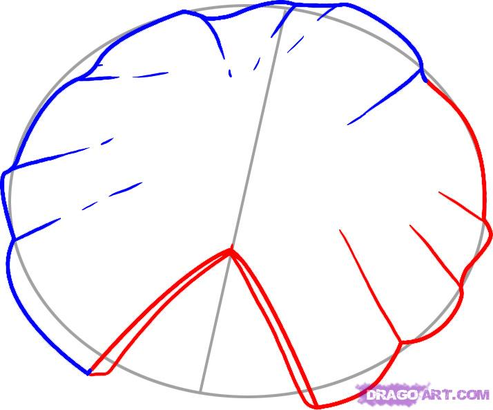 714x593 How To Draw A Lily Pad, Step