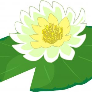 300x300 Photowater Lily Pad Vector Seamless Pattern In Line Drawing Style