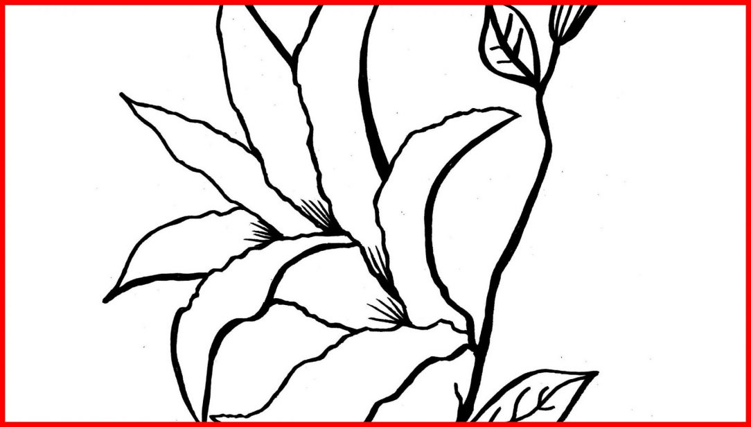 1084x616 Printable Lily Pad Coloring Pages Colouring Free Frog On Sheet I