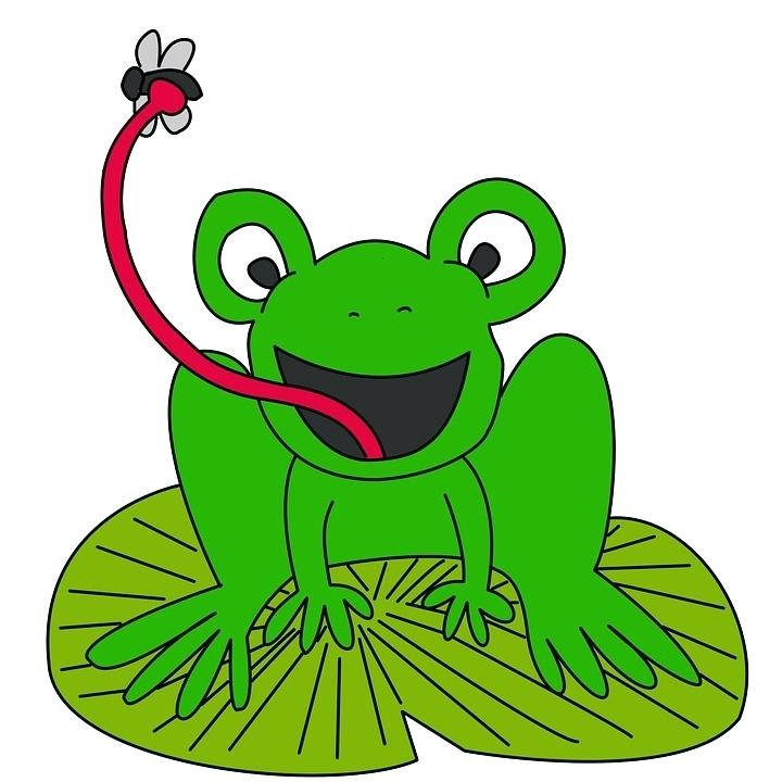 720x720 frog eating fly fly frog lily pad eat animal nature life cartoon