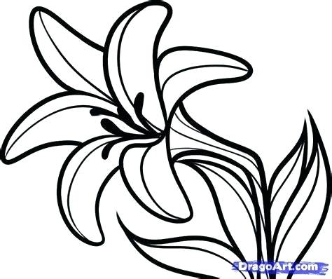 474x398 lily flower outline lily flower outline coloring lily pad flower