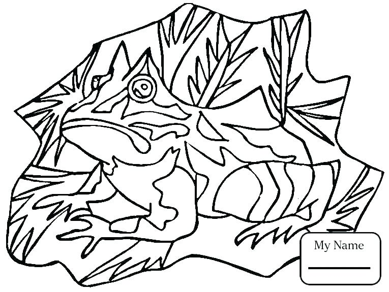765x575 Lily Pad Flower Coloring Pages Lotus