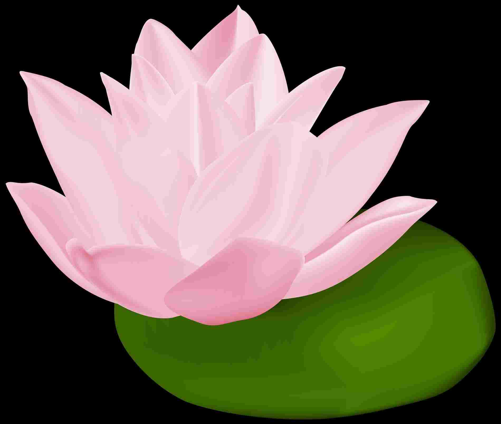 1899x1608 Lily Pad Flower Drawing