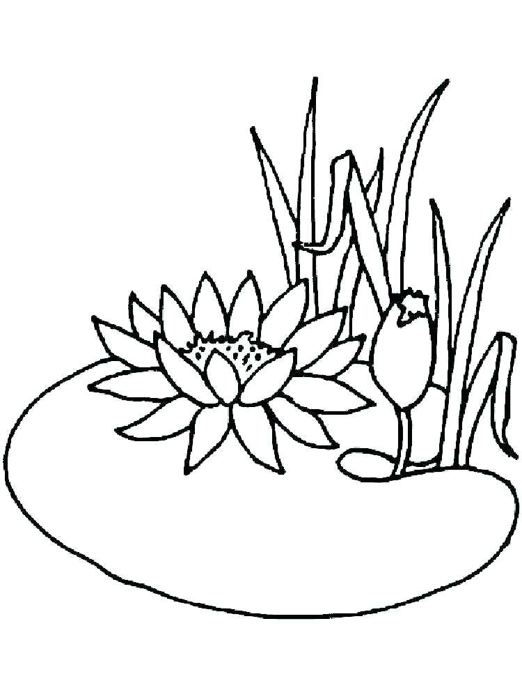 750x1000 Lily Pad Flower Drawing At Getdrawings Com Free For Personal Use