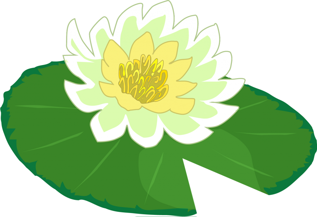 1024x700 Lilypad Drawing Lily Pad Flower Transparent Png Clipart Free