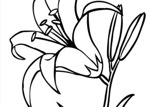 300x210 pad flower drawing to draw a lily wikihowrhwikihowcom pad flower