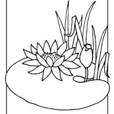 230x230 First Rate Lilly Pad Coloring Pages Lily