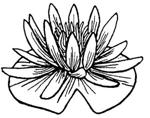 300x236 Unmounted Rubber Stamps, Flowers, Floral Stamps, Water Plants