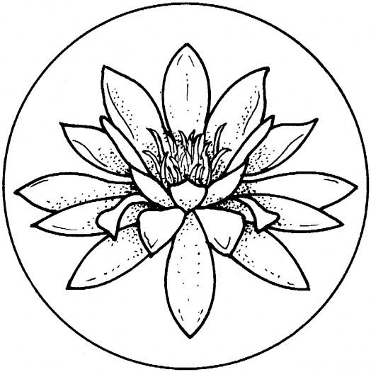 524x525 Water Lily Coloring