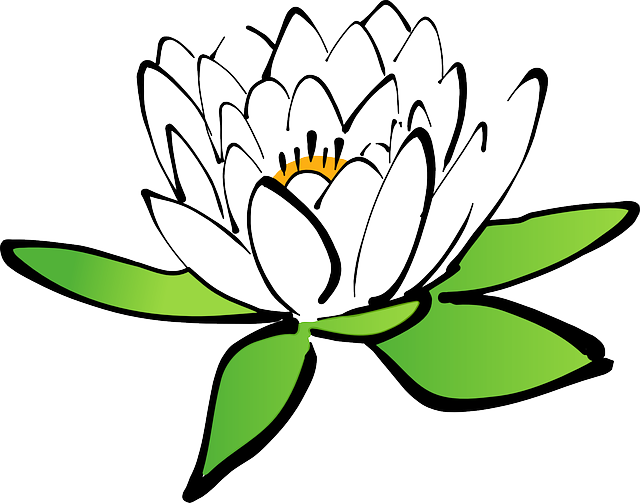 640x503 lilypad drawing water lily transparent png clipart free download