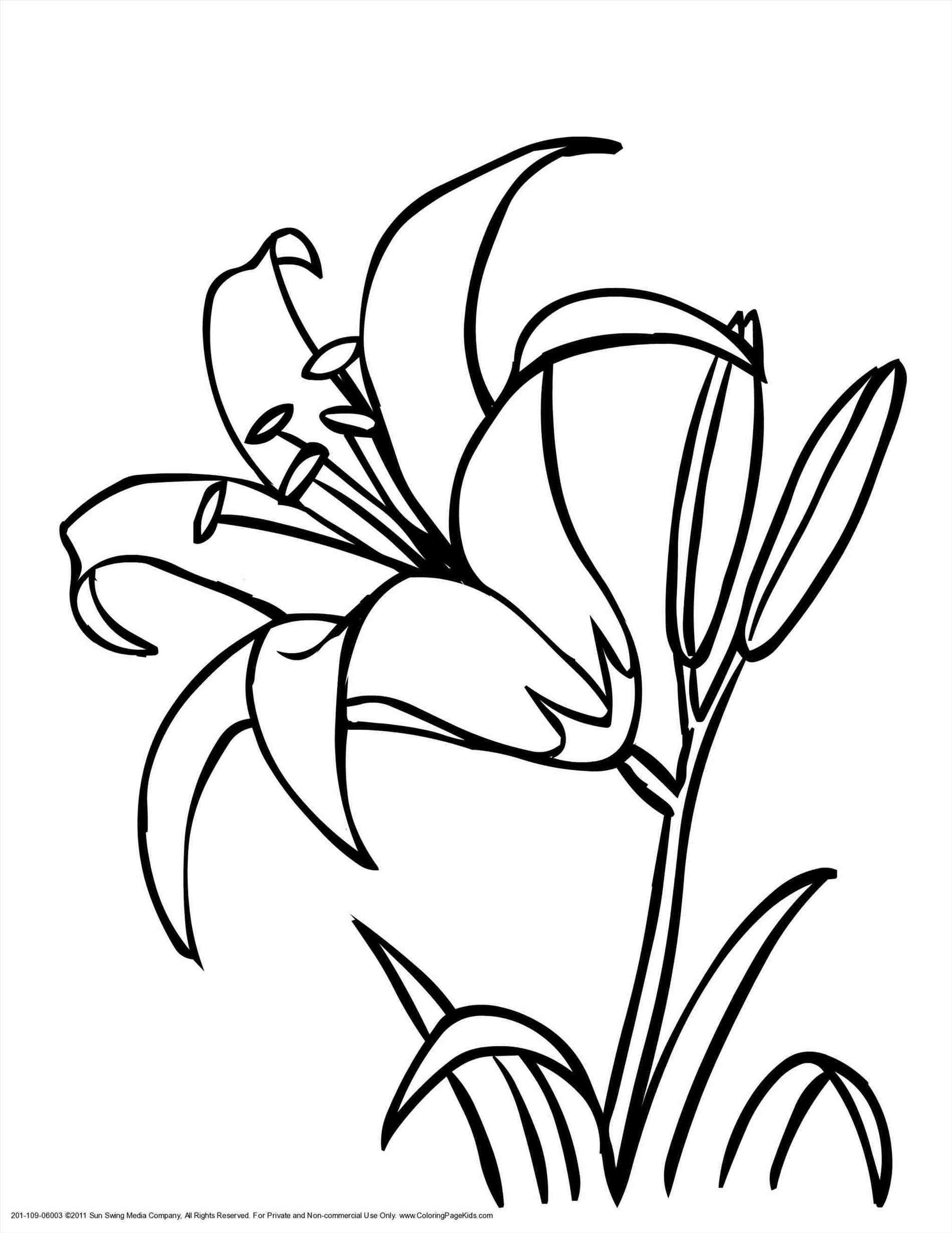 1899x2459 black and white lily drawing lily flower drawing tiger lily