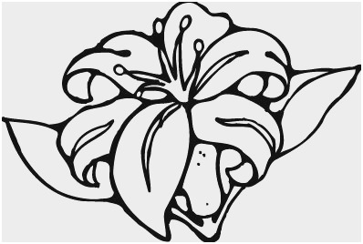398x268 Flower Outline Coloring