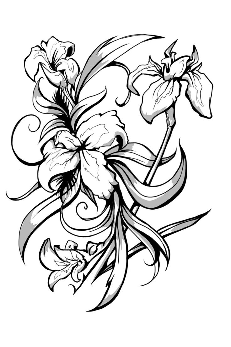 736x1104 Lily Flower Tattoo Design