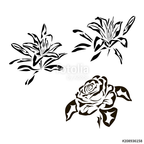 500x500 Vector Drawing Of A Rose Tattoo, Logo Lily Stock Image