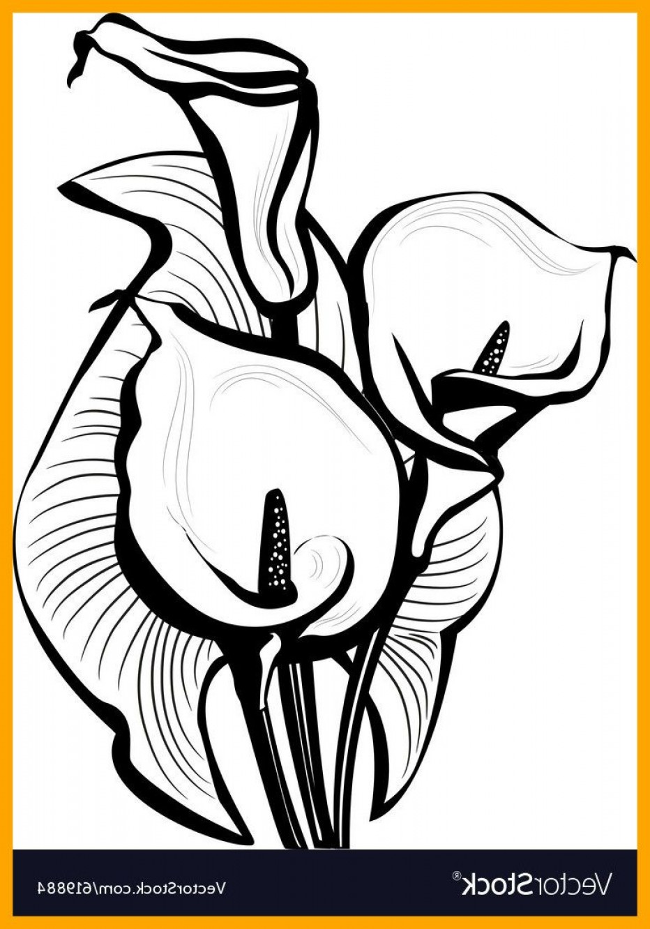 932x1332 White Lily Flower Drawing