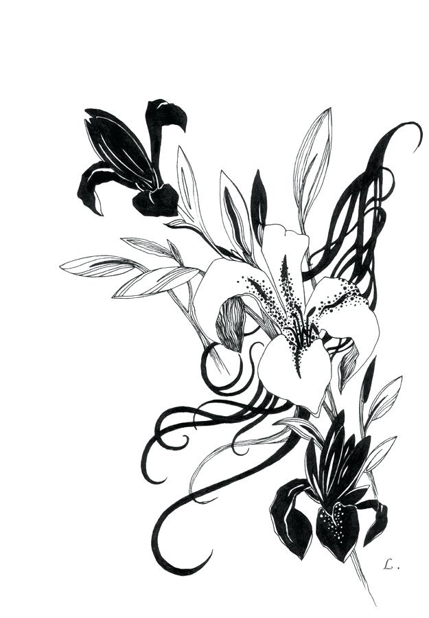 625x900 Drawing Of Lillies