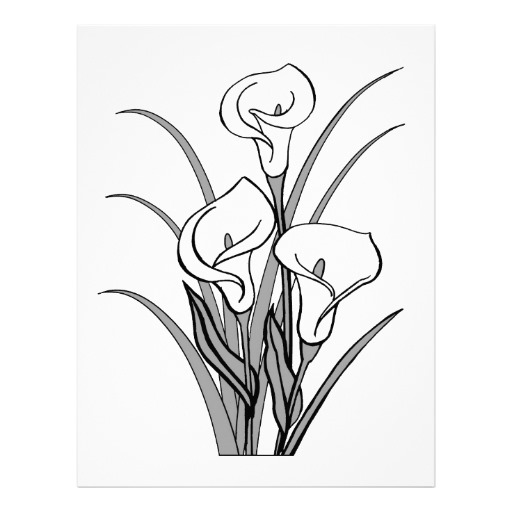 512x512 Calla Lily Clipart Line Drawing Pencil And In Color On Calla Lily