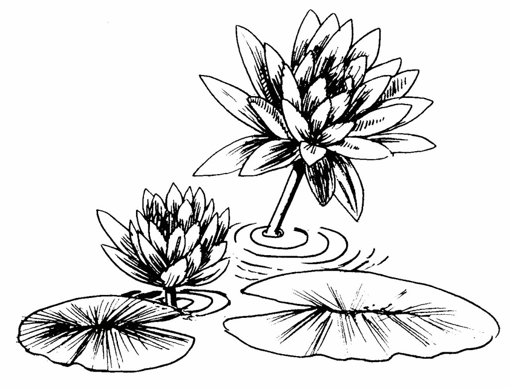 1024x780 Lily Pad Clipart Drawn Free Clip Art Stock Illustrations