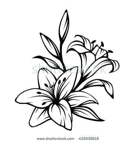 450x470 lily flower drawing how to draw a lily flower step lily pad
