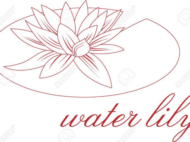 640x480 Lily Pad Clipart Flower Drawing