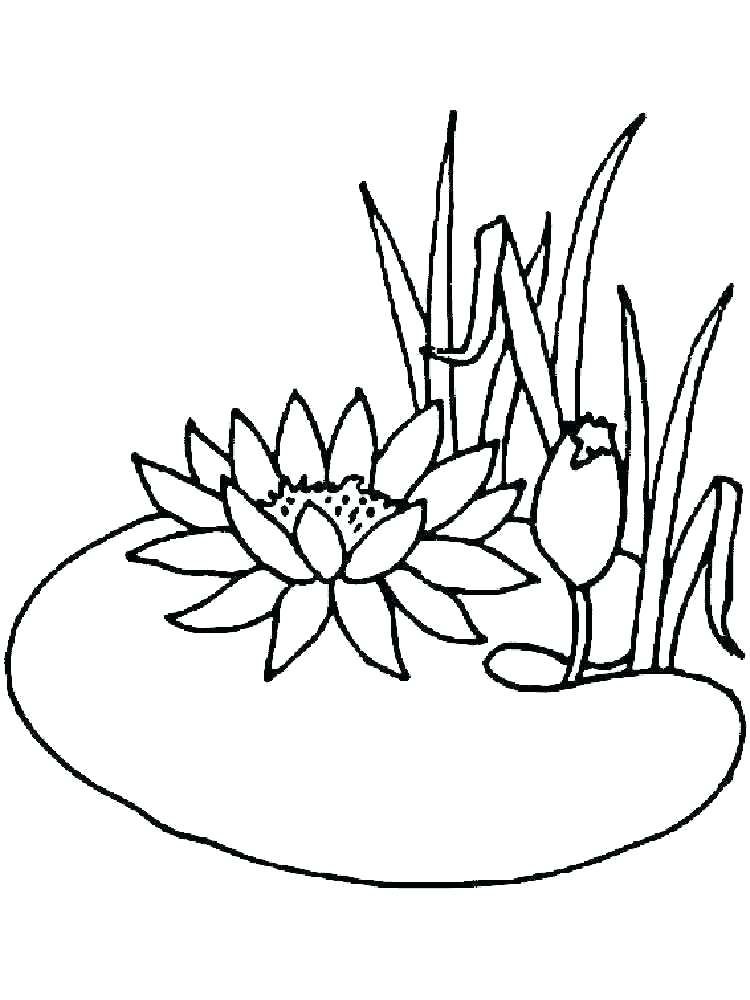 750x1000 Lily Pad Coloring