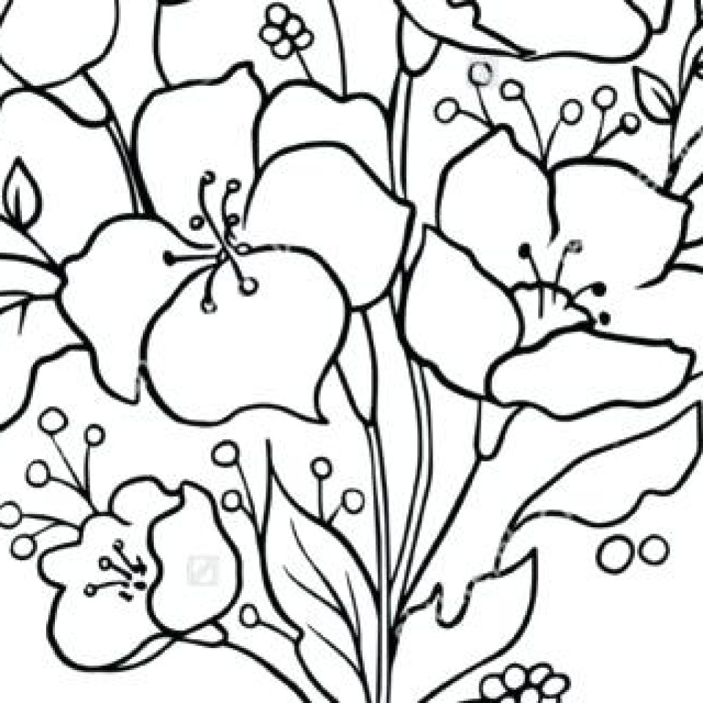 1024x1024 Flower Outline Drawing Fire Clipart House Clipart Online Download