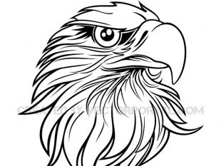 310x233 Vector Line Drawing Of The Eagle Free Vectors Ui Download